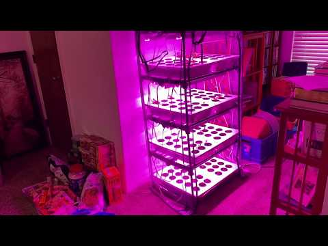 Kratky Hydroponics Seed Starting System Part Three