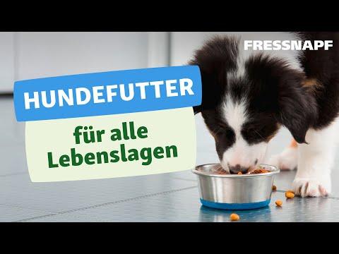 Hundefutter für jede Lebenslage - Welpe, Adult & Senior