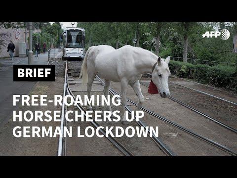 Free-roaming horse Jenny cheers up German lockdown | AFP photo