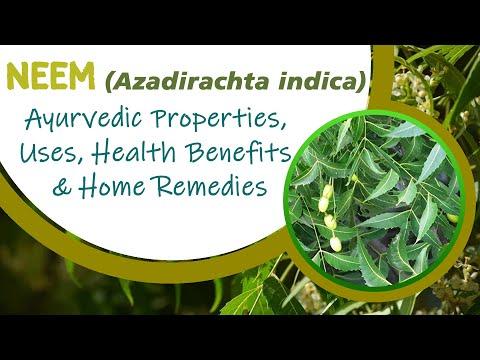 Numerous Health Benefits Of Azadirachta indica Leaves-Neem