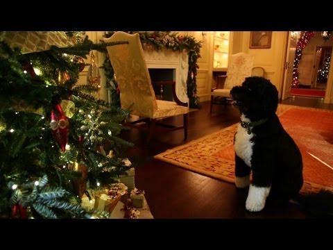 Pupil Obamów i świąteczne dekoracje