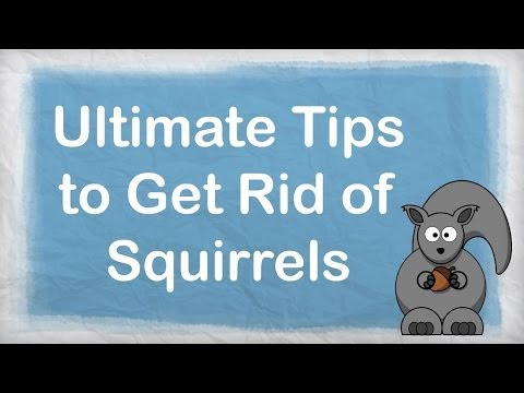 How To Get Rid Of Squirrels Ultimate Repellent For