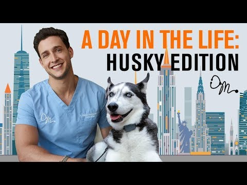 A Day in the Life: Siberian Husky Edition | Doctor Mike