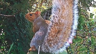 Squirrel Killing Machine  The CO2 Gas Powered A24 Trap In