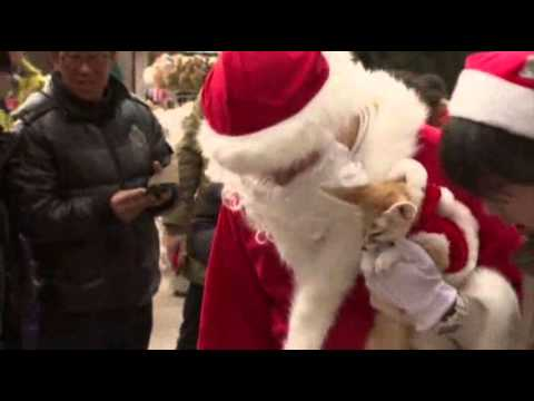 Raw: South Korean Penguins Dress For Christmas - Smashpipe Travel
