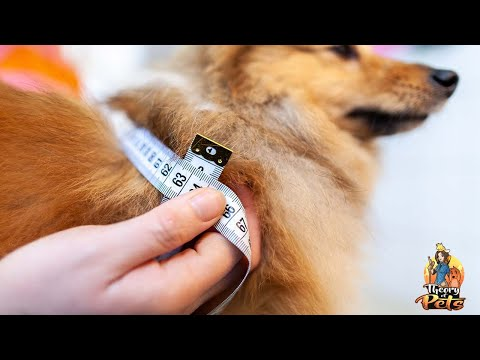 TOP #113: Dangers of Dog Obesity and How to Slim Down Your Dog