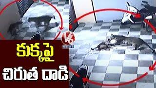On cam: Leopard enters bungalow in Gujarat, attacks pet do..