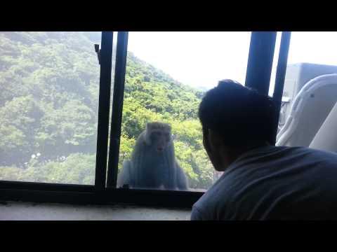 中山大學實驗室窗戶的猴子,很兇哦