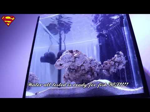 Superman reef tank build progression part 1