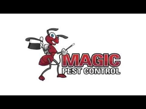 Pest Control   Magic Pest Control