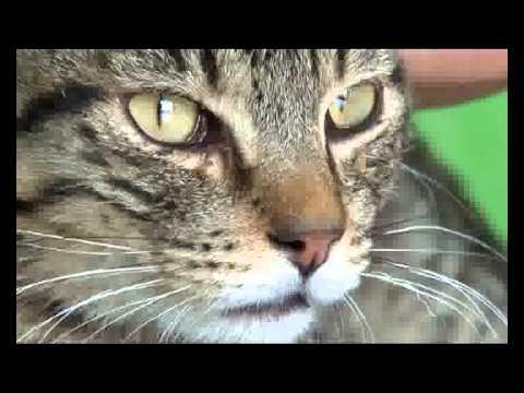 Bolesti urinarnog trakta mačaka 2