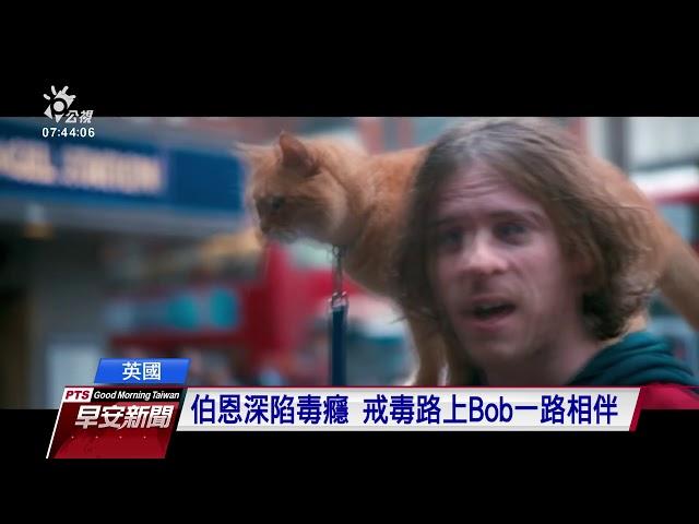英國知名街貓「Bob」 15日逝世享年14歲