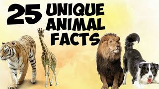 25 Unique And Interesting Animal Facts.