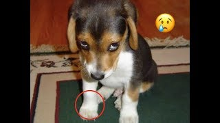 NEW Top 200 Highlights of Animals - VERY Funny Animals 2019