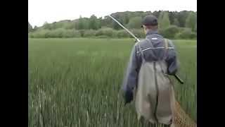 Язь - необычная рыбалка