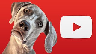 FUNNY CONFUSED ANIMALS AND PETS - TRY NOT TO LAUGH