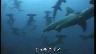 サメの生態2