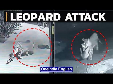 CCTV footage: Leopard hunts pet dog sleeping outside house