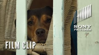 """A DOG'S WAY HOME Clip - """"Go Home"""" (Now Playing)"""