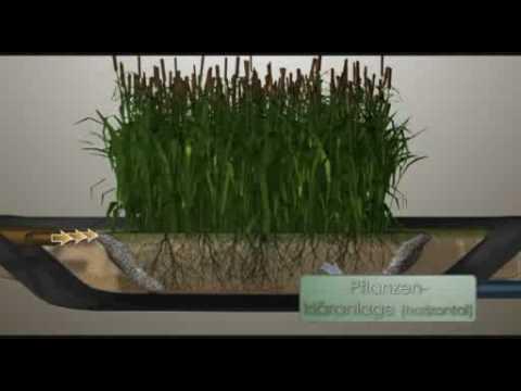 Pflanzenkläranlage - Kleinkläranlage Funktionsweise
