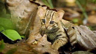 Smallest Cats & Kittens In The World