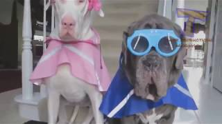 Animals never fail to make us laugh   Super funny animal compilation