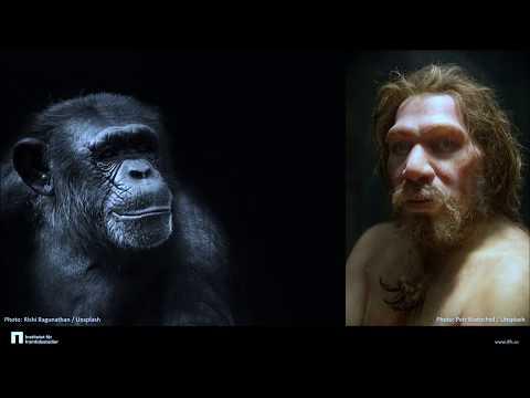 Det kulturella djuret – om människans evolution och tänkandets utveckling