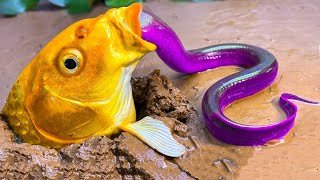 Big Fish, Turtle Eat Small Eel - Stop Motion ASMR Fish Trap Experiment Underground   Unusual Cooking