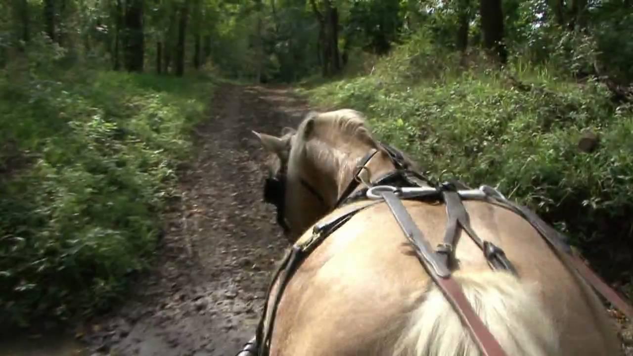 abraham lincoln riding a - photo #31
