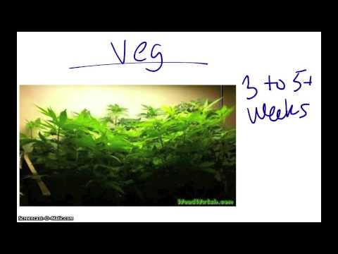How To Grow Weed Indoors Your Complete Guide Musica Movil Musicamoviles Com