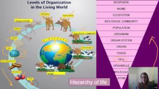 Biology Characteristics of Life