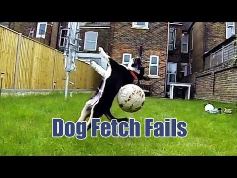 """27 кучиња коишто поим немаат од играње """"фати и донеси"""""""