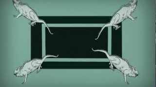 Afenginn - Iguana Segregatis
