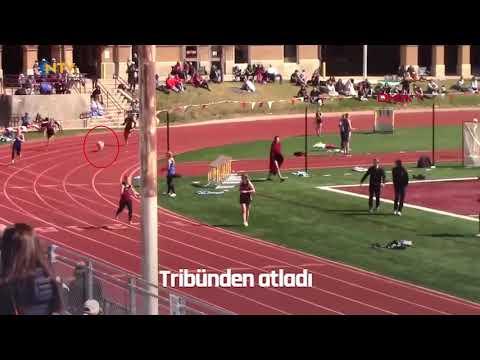 NTV   Tribünden atlayan köpek atletizm yarışmasını birincilikle bitirdi