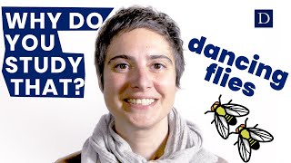 Why Do You Study That? | Dancing Flies video