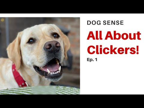 Dog Sense (Ep.1) - All About Clickers!