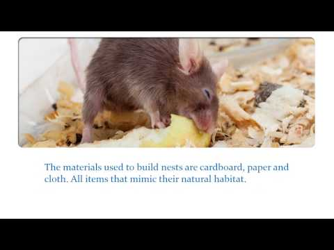 Watch for Signs of Mice in Your Home - YouTube
