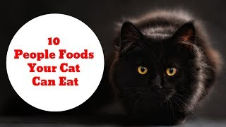 10 People Foods Your Cat Can Eat | Animals Unlimited | Sameer Gudhate