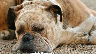 8hours Sleep and relax Music For Dogs, Cats & All Pets, Stress Relief, Anxiety Healing Music 0051