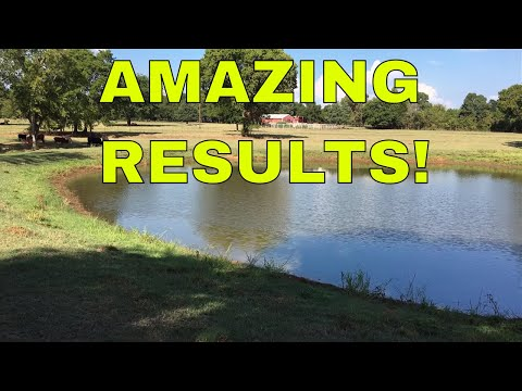 HOW TO SEAL A LEAKING DAM OR POND~ Amazing Results!