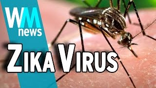 Top 10 Need To Know Zika Virus Facts -
