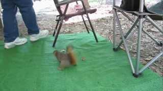 Feeding the Squirrels.flv