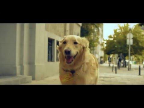 Куче - кредитни карти от Райфайзенбанк