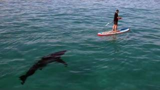 Paddleboarding with the sharks
