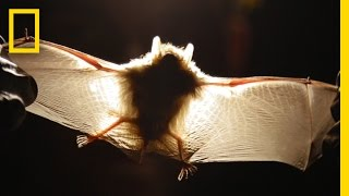 Explore the Hidden and Fragile World Inside Caves | Short Film Showcase