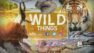 WILD THINGS: Rare, exotic animals could be living in your Tampa Bay neighborhood