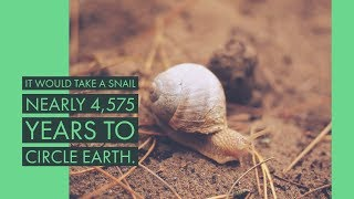 25 Awesome Facts Part 4