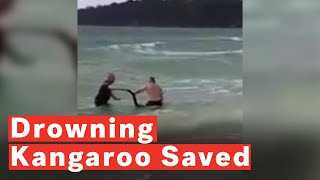 Police Officers Save Drowning Kangaroo