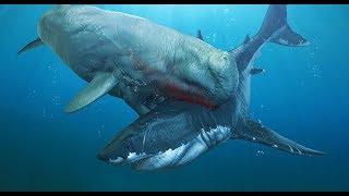 KHÁM PHÁ | Loài Quái Vật Cổ Đại Có Khả Năng Giết Cả Siêu Cá Mập MEGALODON