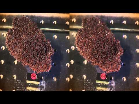 Fire Ants 3D